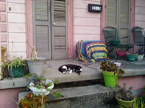 Picture of cat sleeping on front steps of a New Orleans house on a hot evening