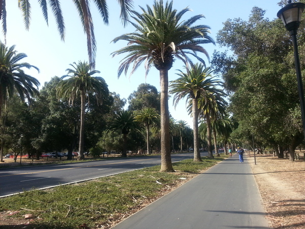 Palm Drive, leading to Stanford University